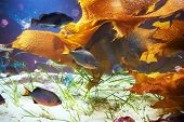 pic of butterfly fish  - Tropical fish near coral reef with blue ocean water - JPG