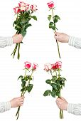image of bunch roses  - set of pink rose bunches of flowers isolated on white background - JPG