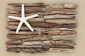 picture of driftwood  - Starfish and driftwood abstract on a sand beach - JPG