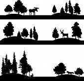 pic of coniferous forest  - set of different landscapes with deciduous trees - JPG
