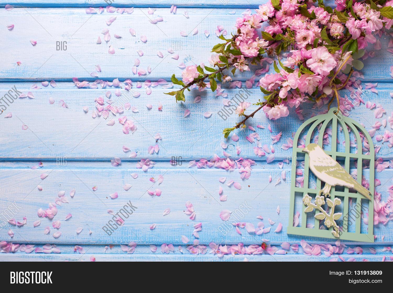 Background Elegant Pink Flowers On Image & Photo