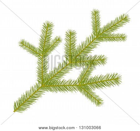 Green spruce twig - decoration vector illustration.
