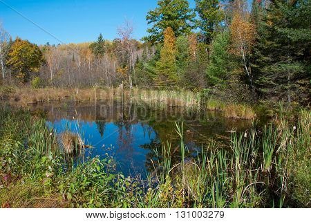 A small forest lake in autumn Marinette county Wisconsin