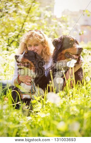 woman with bernese mountain dogs sitting in dandelions toned image