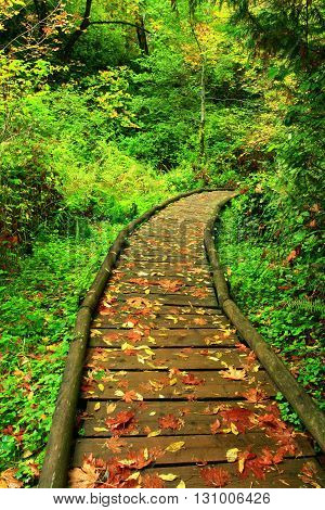 a picture of an Pacific Northwest forest boardwalk