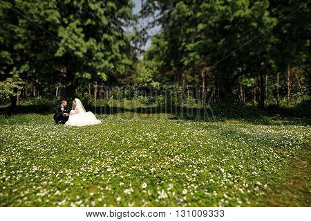 Wedding Couple Sitting In The Meadow Of Spring Flowers At Sunny Day. Tilt-shift Lence Photo