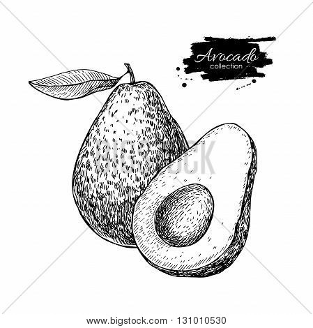 Vector hand drawn avocado and sliced pieces set. Tropical summer fruit engraved style illustration. Detailed avocado food drawing. Great for label poster print