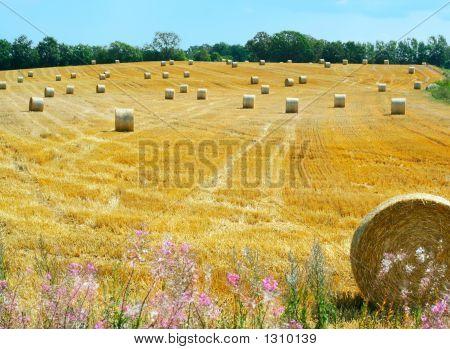 Reaped Wheat Field