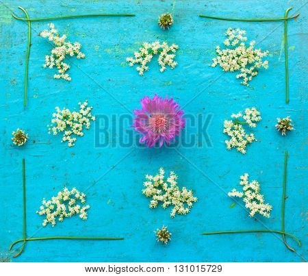 flower cornflower white flowers with elderberry and clover on the old blue grunge background. Flat lay top view