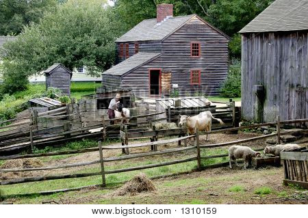 Old Sturbridge Village ,  Ma, Slopping the hogs