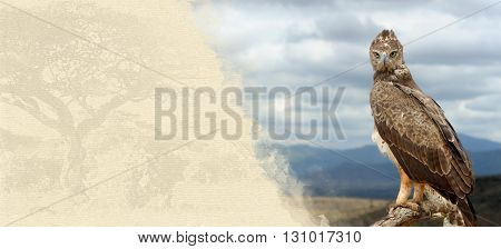 Tawny Eagle On Textured Paper
