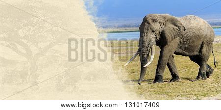 Elephant On Textured Paper