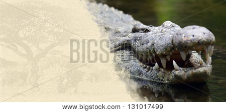 Crocodile On Textured Paper