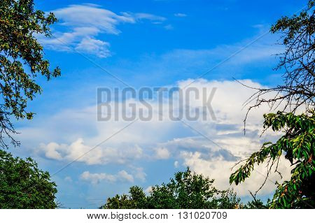 Blue sky with clouds and tree branches
