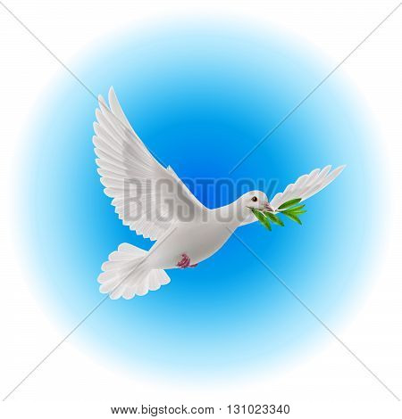 White dove flying with olive branch in its beak in blue sky