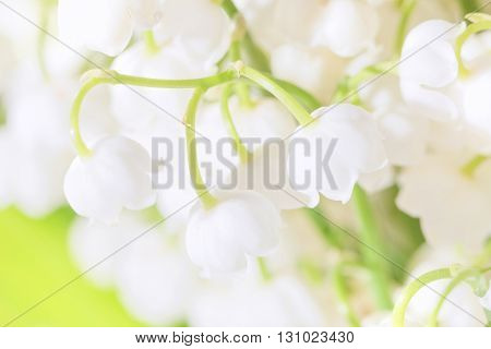 Close-up beauty lilies of the valley like present