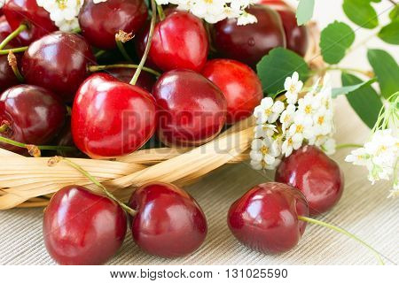 Fresh sweet cherries with white flowers on a wicker plate on a light background