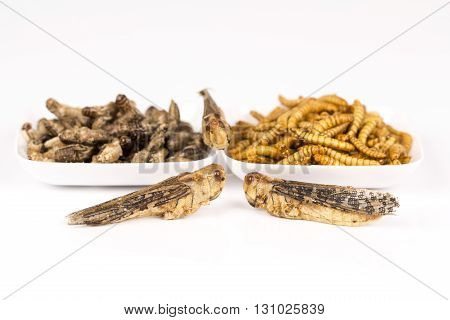Fried crickets locust molitor insects, in white plates white background