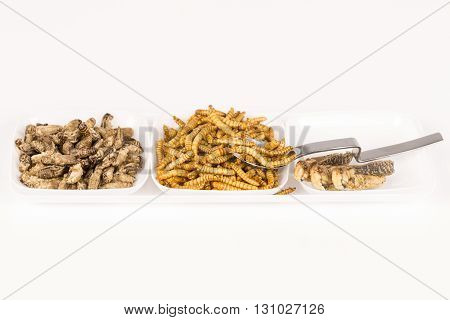 Fried crickets locust molitor insects, in plate with spoon