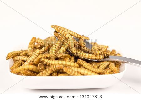 Plate of fried insects with spoon. molitors,