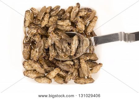 Fried crickets insects, food of future rich protein France