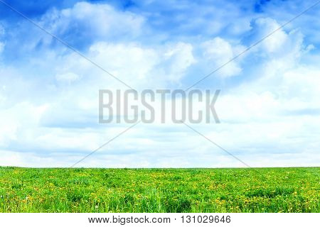 Field of a grass and perfect sky