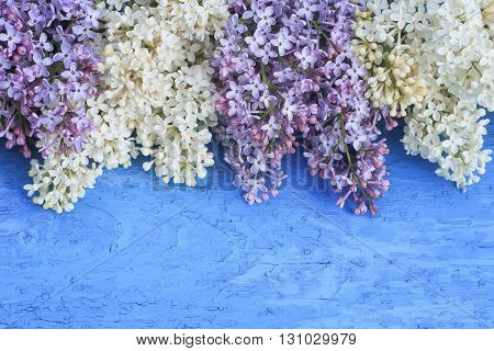 festive background of white and purple lilac on blue wooden surface