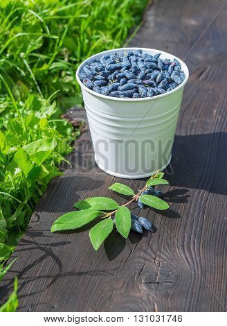 A bucket of honeysuckle berries with leaves on wooden background standing on green grass in the garden. Bright sun with sharp shadows.