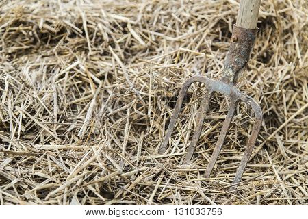 Old farmer's Pitchfork on farm hay in the garden