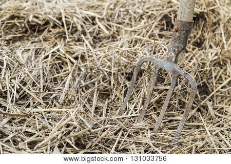 Old farmer's Pitchfork on farm hay in the garden