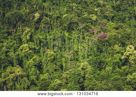 A dense wall of trees on the side of a mountain.