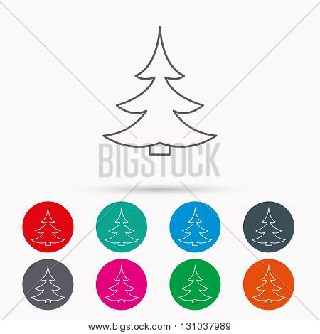 Christmas fir tree icon. Spruce sign. Winter forest symbol. Linear icons in circles on white background.