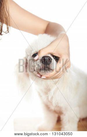 Closeup Of White Dog Hair Cut