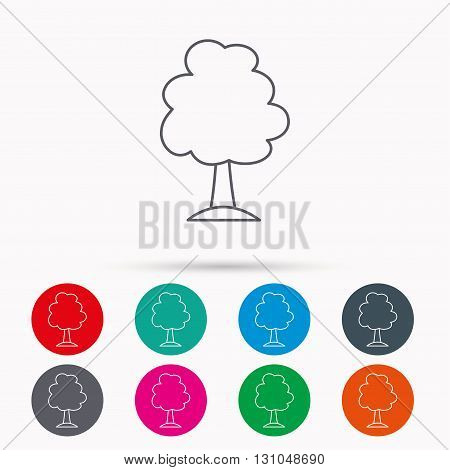 Tree icon. Forest wood sign. Nature environment symbol. Linear icons in circles on white background.