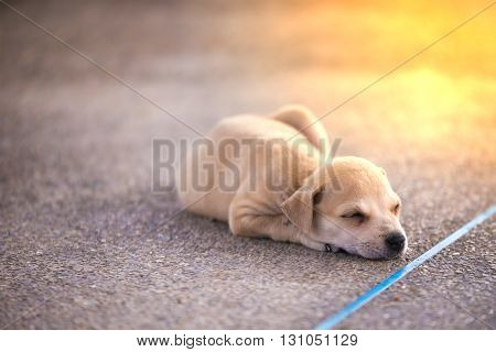 Puppy sleeping on the floor. Street dog.