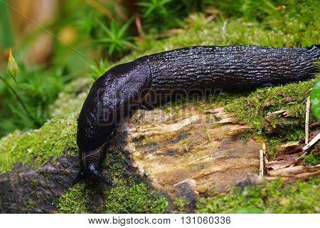 slug in the green forest