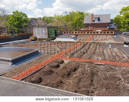 Rooftop garden in urban setting in early spring