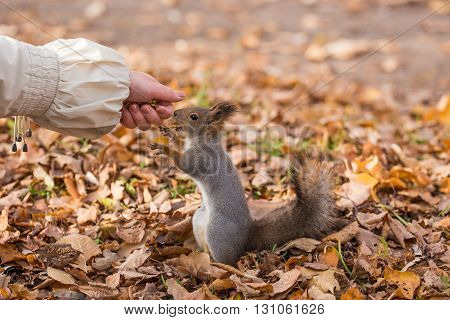 squirrel eating a nut on the palm