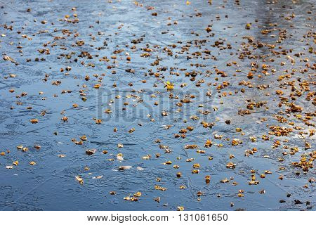 Fallen autumn leaves on the first ice