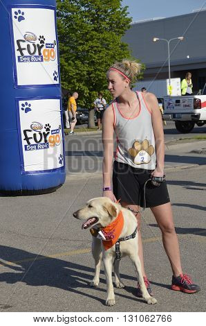 FARGO, NORTH DAKOTA-May 16, 2016: A dog and trainer waits for the Furgo dog race which is ready to start at the annual Fargo Marathon which also includes a cyclothon, youth, 5K, 10K,half and full runs.