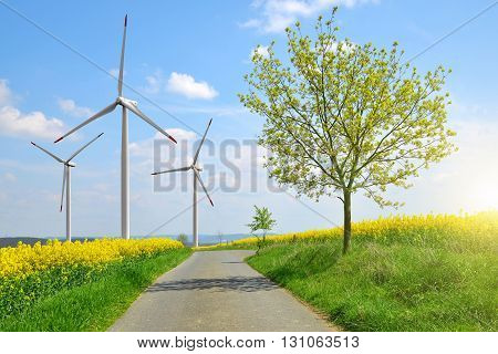 Asphalted road in rapeseed field in the background wind turbines. Spring landscape.