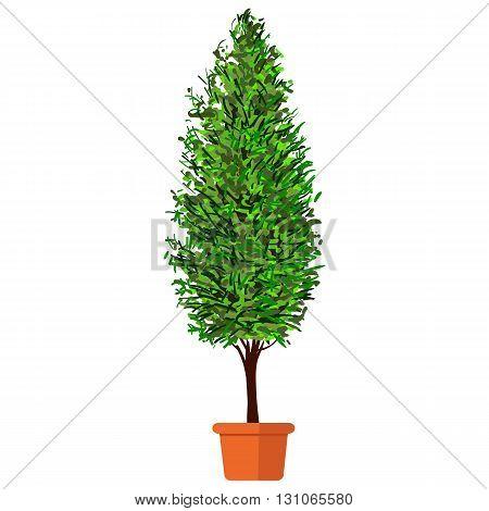 Vector illustration plant in pot. Thuja in pot