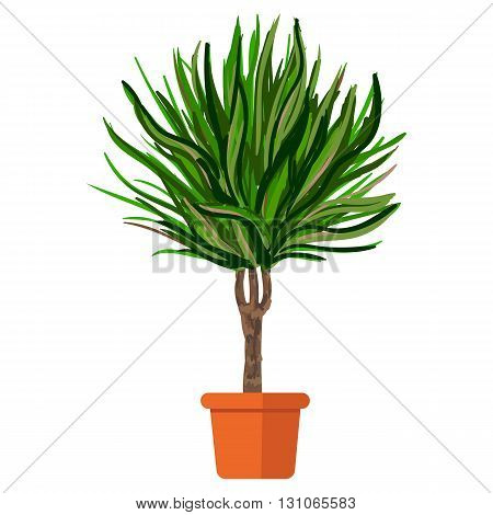 Vector illustration plant in pot. Palm tree