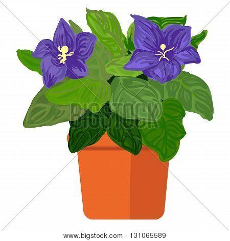 Vector illustration plant in pot. Violet in pot