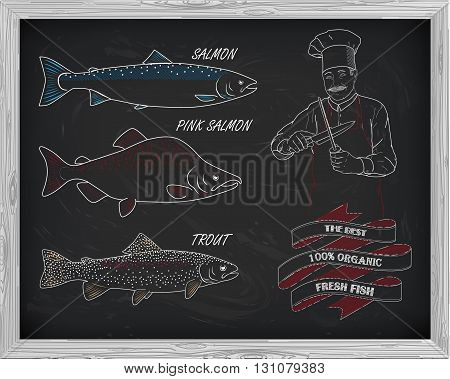 Beautiful Pattern Of Salmon, Trout And Pink Salmon. Chef With Knives With A Drawing Of White
