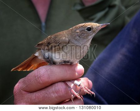 Small bird being held in a hand in zaragoza