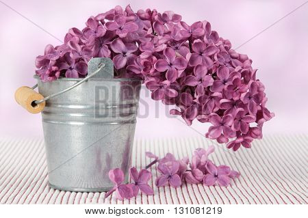 metal bucket with a bouquet of purple lilac spring flowers on textured background