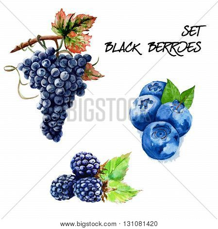 Set with black grapes strawberries and blackberries. isolated. hand-painted watercolor