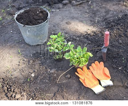 young plants and inventory on a soil