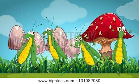 Four grasshoppers on the lawn illustration